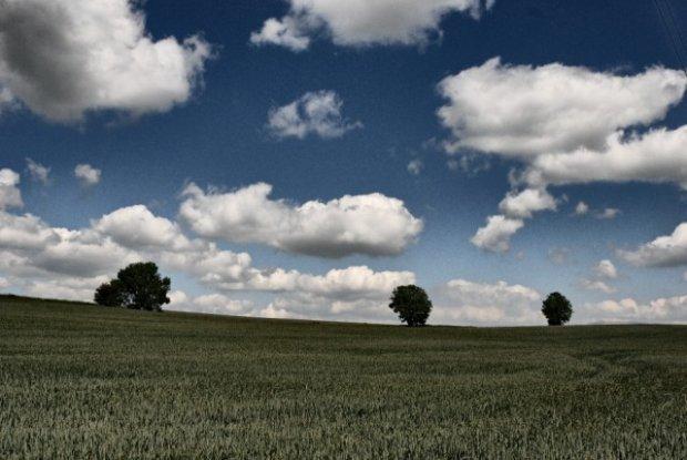 The Grassy Field